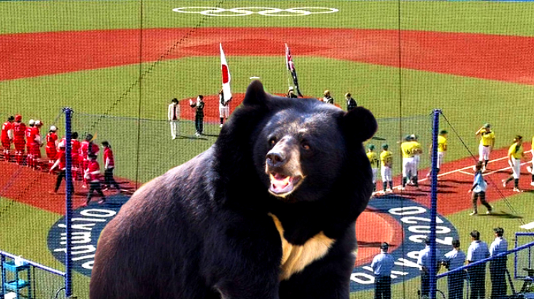 Матч по софтболу на Олимпиаде-2020 мог быть сорван из-за медведя, проникшего на стадион